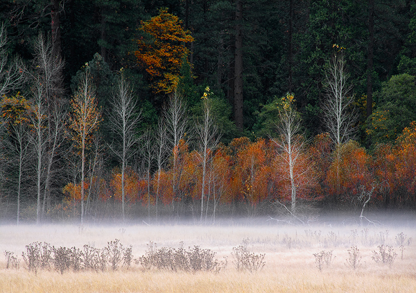 Home Page Picture-Leidig Meadow, Autumn, Yosemite Valley